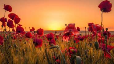 Welche Blumen für die Trauerfeier?